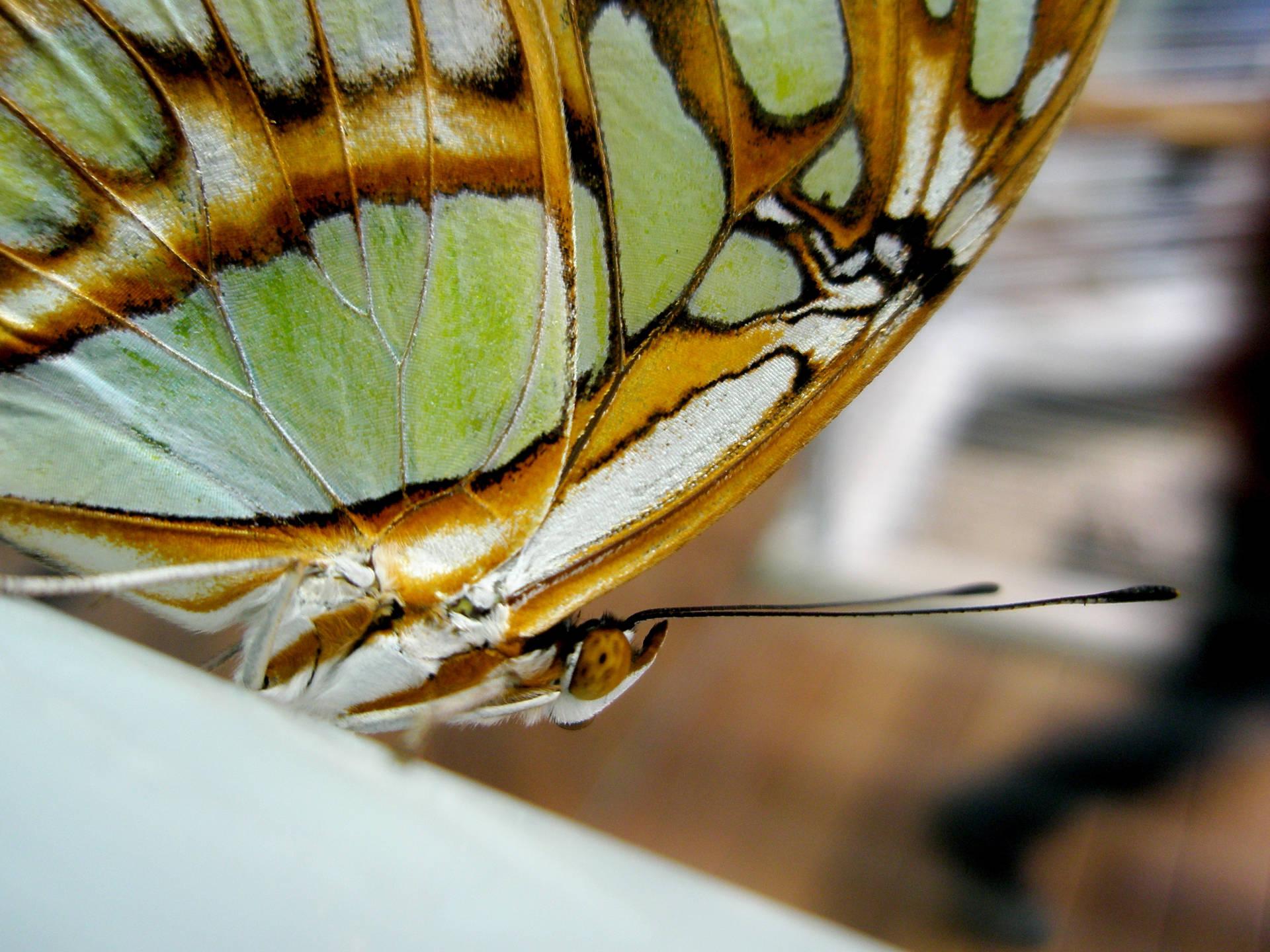 randi_hausmann_hochempathie_butterfly